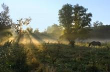 Dawn in Svyatogorie / ***