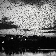 Ravens ... / ***